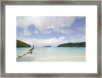 Pelican Perched By Maho Bay Framed Print