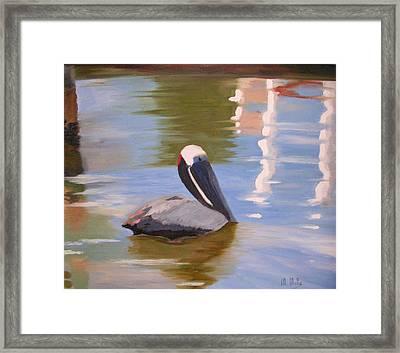 Pelican Pete Framed Print