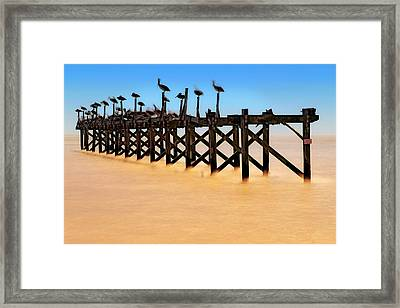 Framed Print featuring the photograph Pelican Pier Near Pass Christian - Mississippi by Jason Politte
