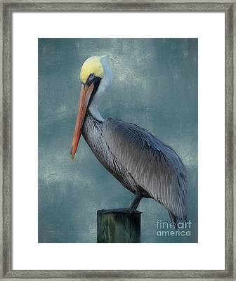 Framed Print featuring the photograph Pelican Portrait by Benanne Stiens