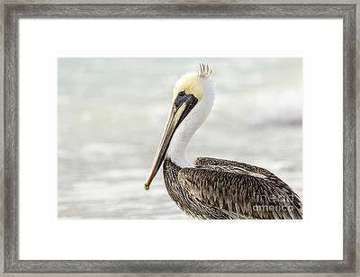Pelican Pose Framed Print