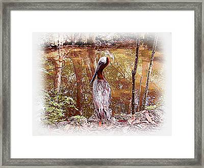 Framed Print featuring the photograph Pelican Posed by Martha Ayotte