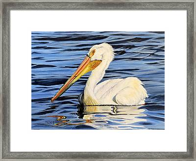 Pelican Posing Framed Print by Marilyn McNish