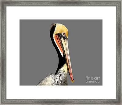Pelican Posing Framed Print by Susan Wiedmann