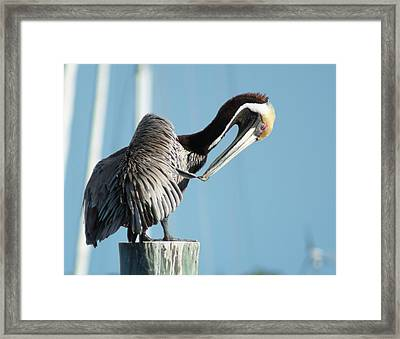 Framed Print featuring the photograph Pelican Preen by Lynda Dawson-Youngclaus
