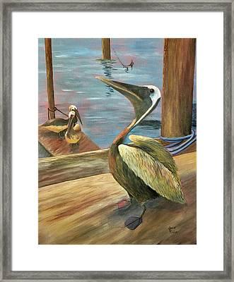 Pelican Pride Framed Print