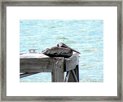 Framed Print featuring the photograph Pelican Resting by Terri Mills