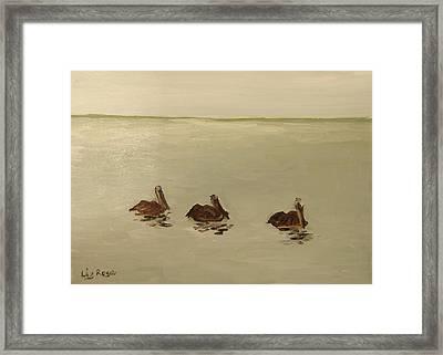 Pelican Study 1 Framed Print by Liz Rose