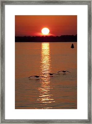 Pelican Sunset Framed Print by Dustin K Ryan