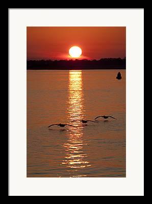 Ashley River Framed Prints