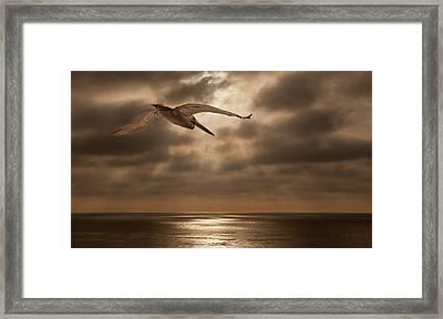 Pelican Sunset Framed Print