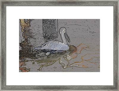 Pelican Swim IIi Color Pencil Framed Print