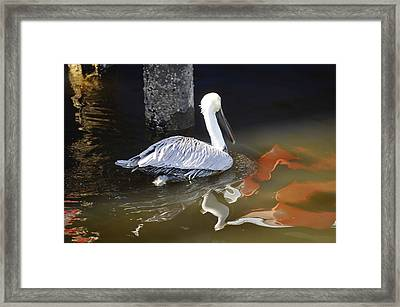 Pelican Swim Framed Print