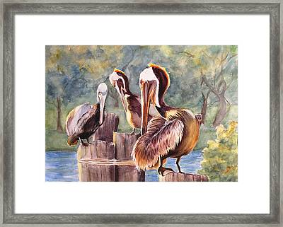 Pelican Town Meeting  Framed Print by Barbara Jung