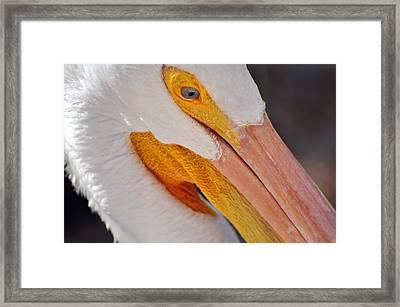 Pelican Twist Framed Print by Marty Koch