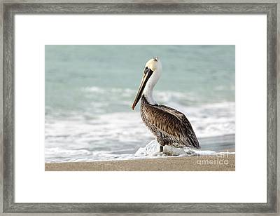Pelican Waves Framed Print