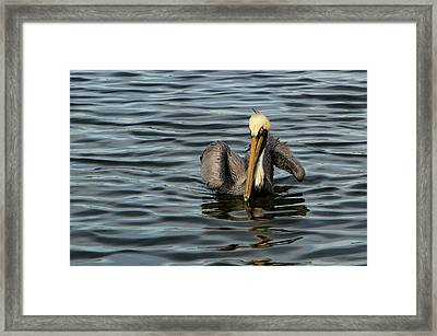 Framed Print featuring the photograph Pelican Wing In A  Twist by Jean Noren