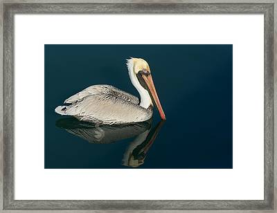 Framed Print featuring the photograph Pelican With Reflection by Bradford Martin