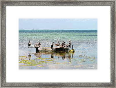 Pelicans And Anhingas In Islamorada Florida Framed Print by Michelle Wiarda