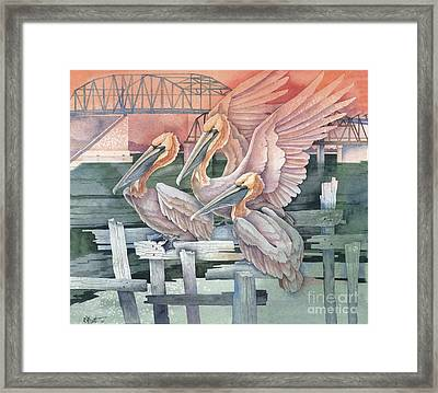 Pelicans At Audobon Island Framed Print by Paul Brent