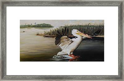Pelicans At The Confluence Framed Print by Rob Dreyer
