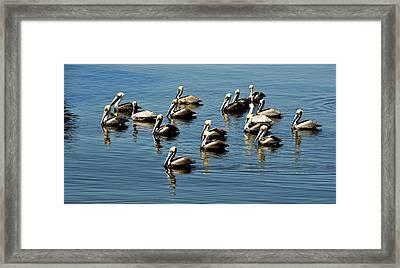 Pelicans Blue Framed Print