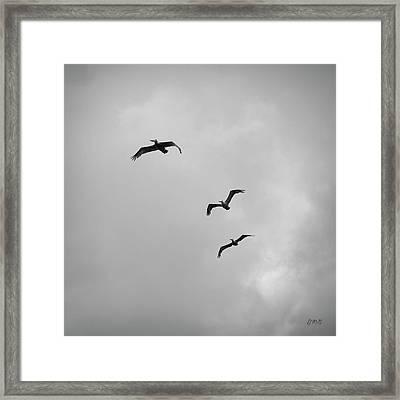 Pelicans In Flight I Bw Framed Print by David Gordon