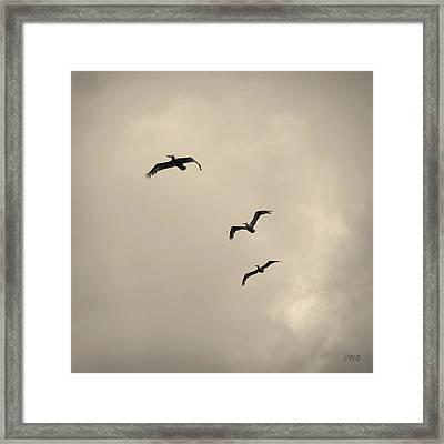 Pelicans In Flight I Toned Framed Print by David Gordon