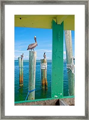 Pelicans Framed Print by Mike Horvath