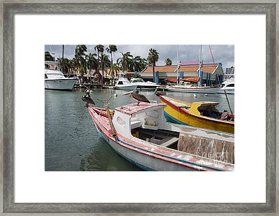 Pelicans On A Small Fishing Boat At Oranjestad Harbor, Aruba, Caribbean Islands Framed Print by Dani Prints and Images