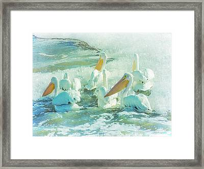 Pelicans On The Tide Framed Print