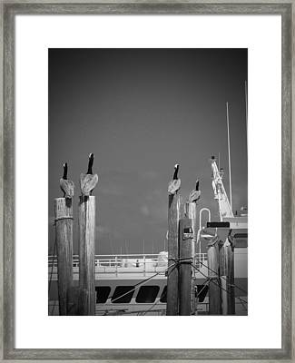 Pelicans Perched By Sailboat Framed Print by Megan Verzoni