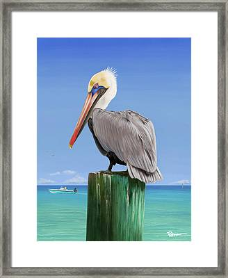 Pelicans Post Framed Print by Kevin Putman
