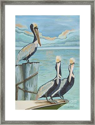 Pelicans Three Framed Print by Jennifer  Donald