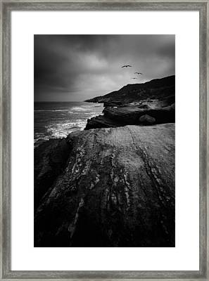 Pelicans Three Framed Print by Joseph Smith