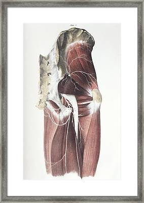 Pelvic Spinal Nerves Framed Print by Sheila Terry