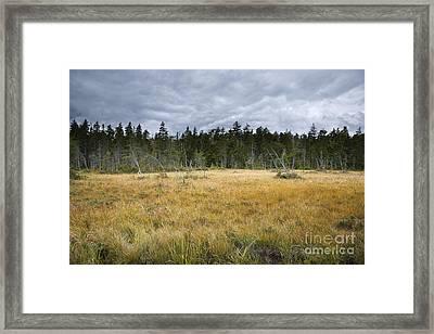 Pemigewasset Wilderness - Lincoln New Hampshire Usa Framed Print by Erin Paul Donovan
