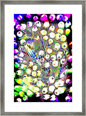 Pencil Pop Framed Print by Tom Gowanlock