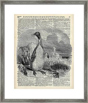 Penguin On Arctic Framed Print by Jacob Kuch