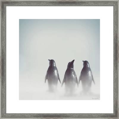 Penguins In The Mist Framed Print by Wim Lanclus