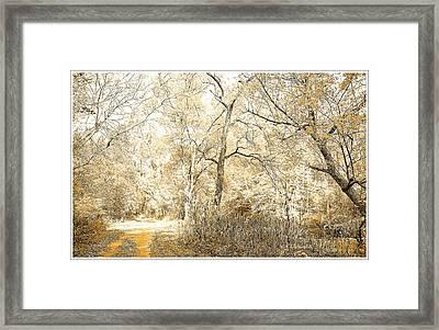 Pennsylvania Autumn Woods Framed Print