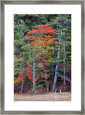 Pennsylvania Laurel Highlands Autumn Framed Print by John Stephens