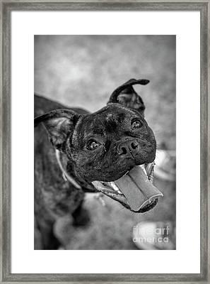 Penny - Dog Portrait Framed Print