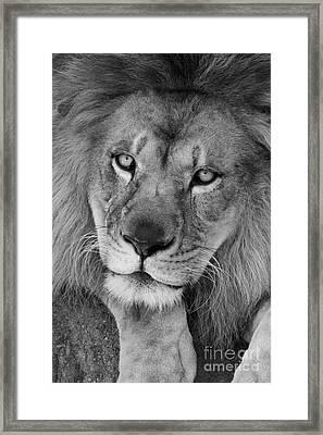 Pensive Black And White Framed Print
