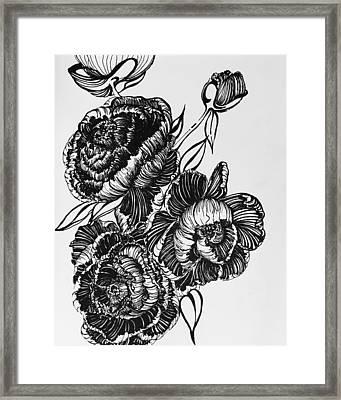 Peonies Line Drawing Framed Print