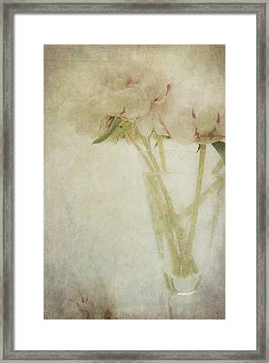 Peonies Framed Print by Marion Galt