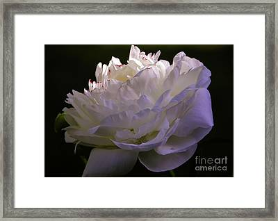 Peony At Eventide Framed Print by Marilyn Carlyle Greiner