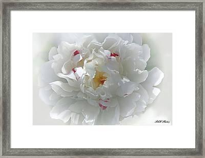 Peony Framed Print by Bonnie Willis