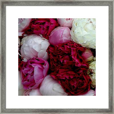 Peony Bouquet Framed Print by Lainie Wrightson
