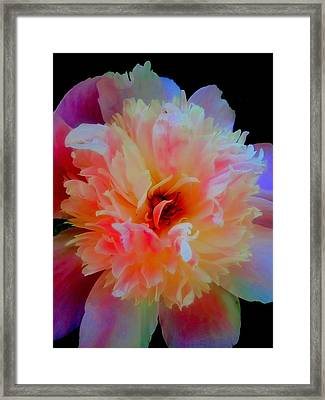 Peony Color Play Framed Print